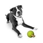 PETPROJEKT - Design and Fun for your Dog - PP-Tretbal - Tretbal