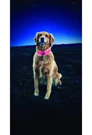 NITE IZE - Innovative Accessories - NI-NND2 - Nite Dawg LED Dog Collar