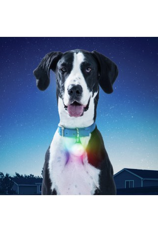 NITE IZE - Innovative Accessories - NI-PSLGR-07S-R6 - SpotLit XL Rechargeable Collar Light, disco select
