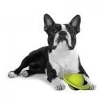 PETPROJEKT - Design and Fun for your Dog - PP-Ringbal - Ringbal